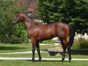 Lot 161 Oasis Dream- Soudanaise