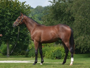 Lot 34 High Chaparral- Chocolat Chaud