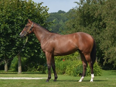 Lot 394 Lawman-Bay Laurel