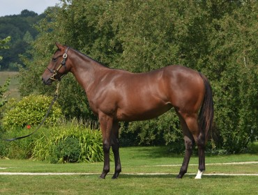 Lot 444 Requinto- Khandaar