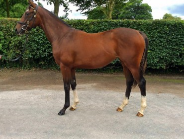 Lot 5 Oasis Dream - Yesterday