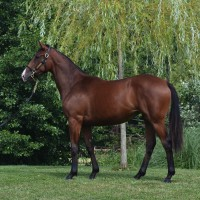 Lot 58 Fastnet Rock- Fill my Heart