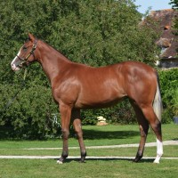 Lot 8 Teofilo- Zeiting